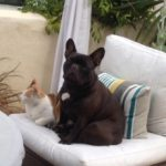 Four Positive Energy Lessons I Learned from My French Bulldog